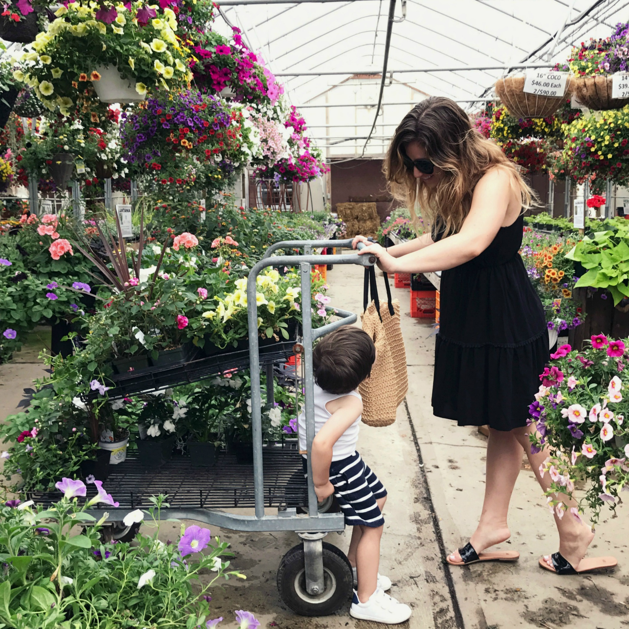 5 secrets that will help you choose the right plants from the garden center this summer!