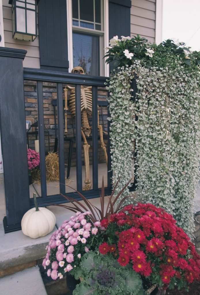 fall front porch with mums, kale and white pumpkins