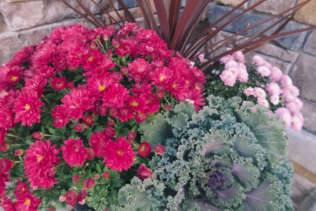 Fall planters with mum and kale
